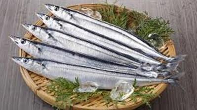 日本のサンマ漁獲量制限案、採択ならず