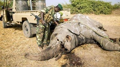 電子商取引大手が象牙の取引を禁止