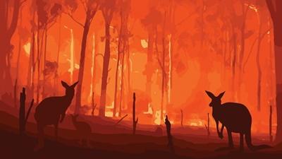 オーストラリア森林火災、消火活動の航空機墜落で 3 人死亡