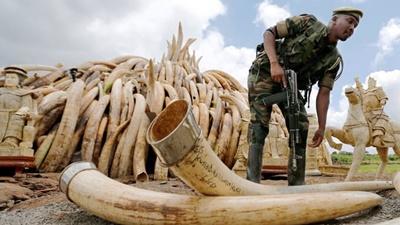 ヤフージャパン、象牙取引を禁止へ