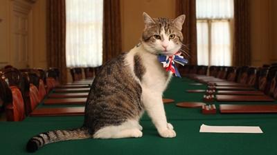 英国のLarry the cat