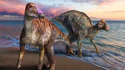 淡路島の化石は新種の恐竜